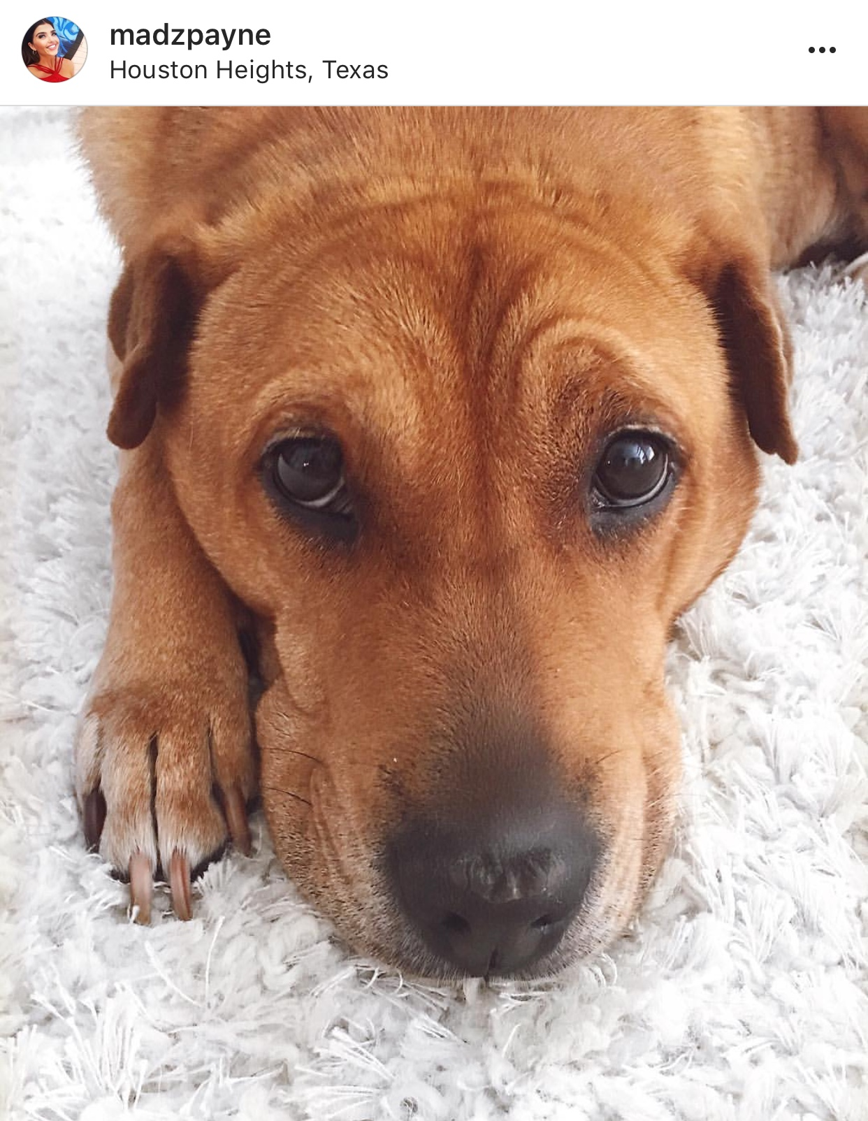 Milo Instagram Pets Dogs